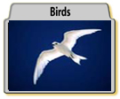 Bird Photographs